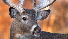 Whitetail Deer Hunting Guides and Outfitters Ohio